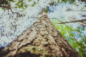 Pixabay_tree