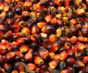 Palmefrugter