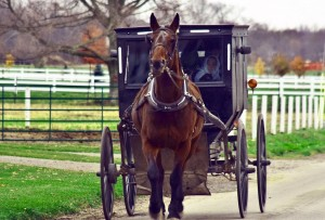 Amish_horsewaggon