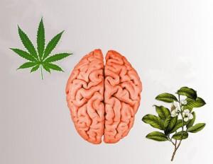 Hjerneurter